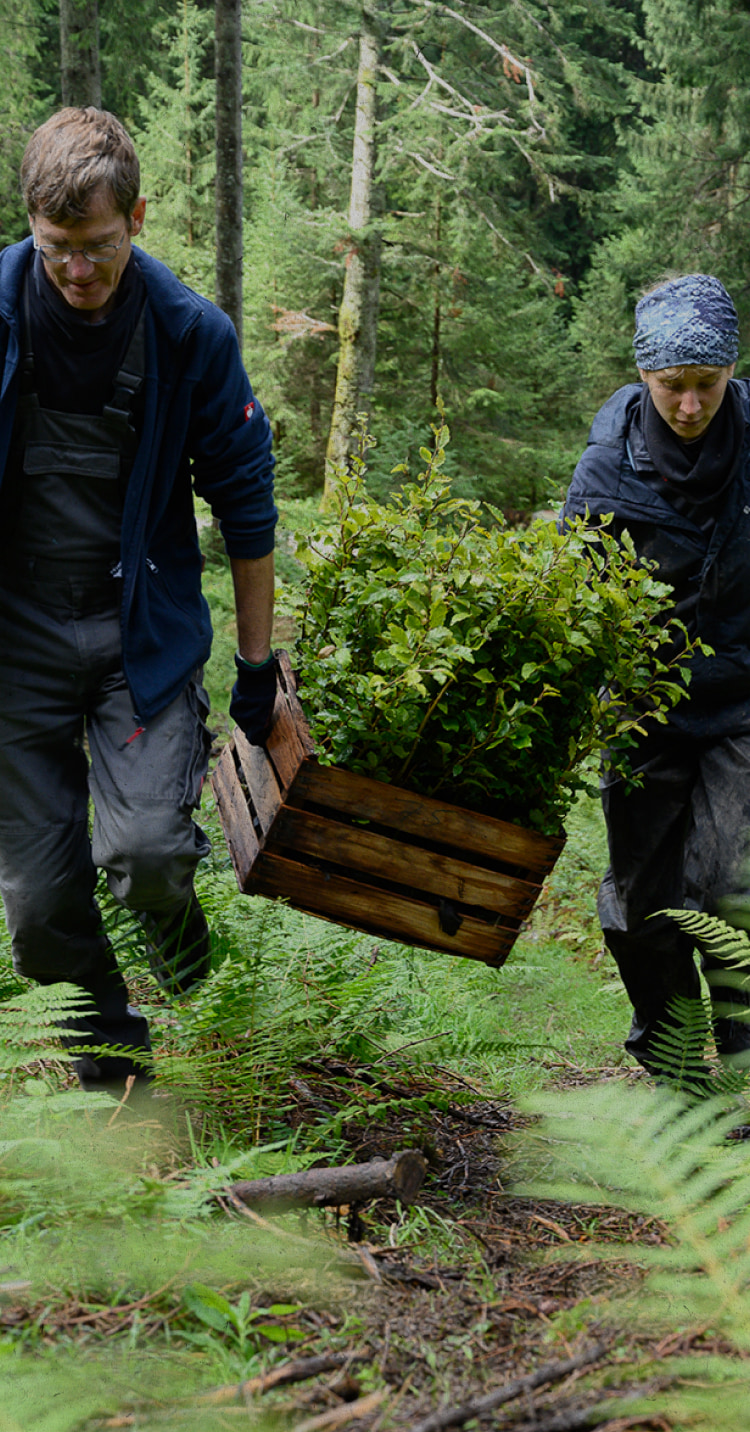 People carrying a box of plants