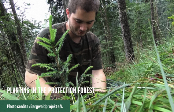 Planting in the Protection Forest